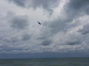 чайка над морем в облаках