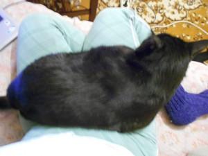 черный кот на ручках