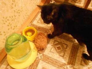 кот принес моток на кухню