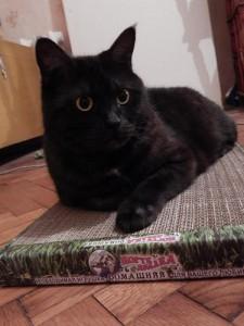 кот Муся лежит на когтедралке