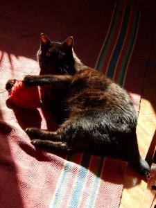 кот Муся и клубок