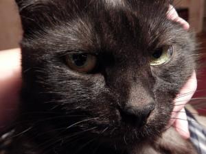 портрет черного кота Муси