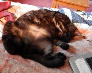 кот Муся спит