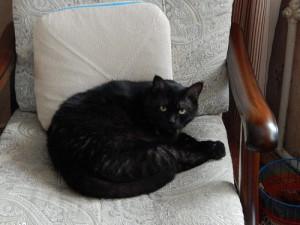 черный кот Муся в кресле