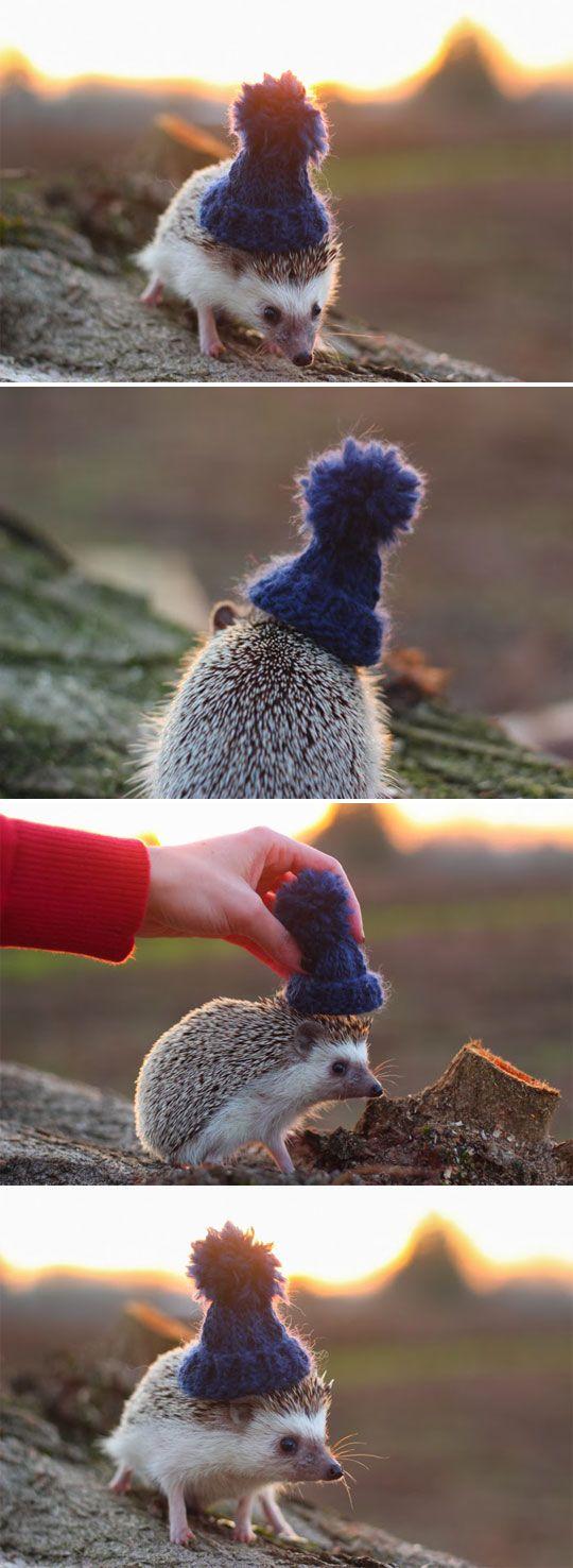 ёжик в шапке