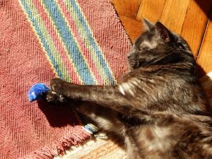 черный кот Муся и синяя мышь