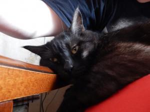 черный кот Муся на кресле