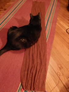 кот на шарфе