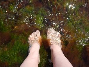 ноги в морских водорослях