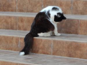 черно-белый кот с остановки