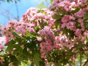 красивый розовый цветочек