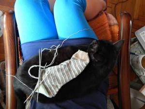 черный кот Муся сидит на ручках