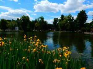 пруд в парке горького летом