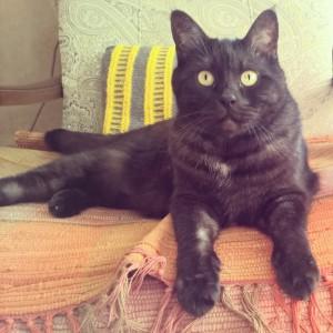 кот Муся в инстаграме