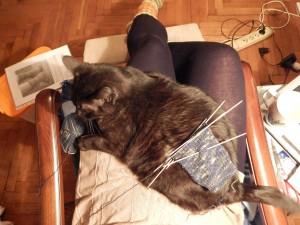 кот на ручках