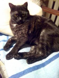 чёрный кот Муся на кресле