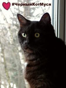 как сделать фотографии удобными для пинтереста. изучаем хтмл-код на примере фотографии чёрного кота Муси.