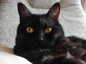 портрет чёрного кота Муси | Хорошо.Громко.
