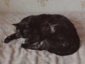 Чёрный кот Муся | HoroshoGromko.ru