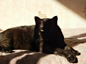 чёрный кот Муся   Musia the black cat   HoroshoGromko.ru