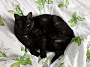 Чёрный кот Муся с грозным выражением летса | HoroshoGromko.ru